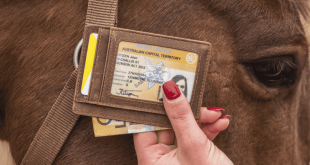 Best crazy horse leather wallet