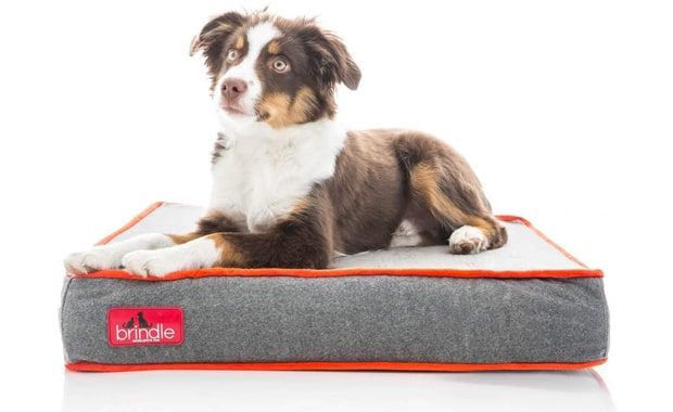 Brindle-Waterproof Designer-Memory Foam Pet Bed