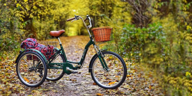 Best Adults Tricycle