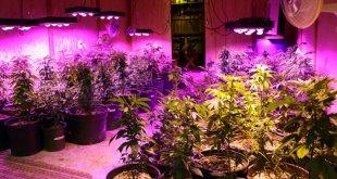 Best LED Grow Light